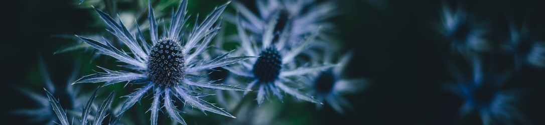 bloom-1845116_1920