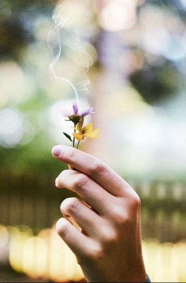 flower-1210067_1920