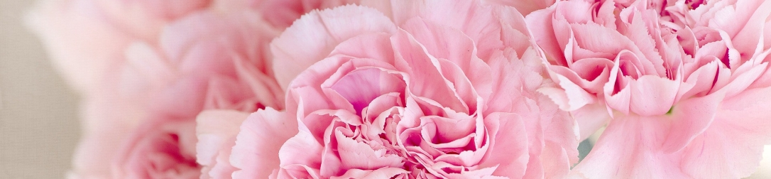 flowers-1325012_1920