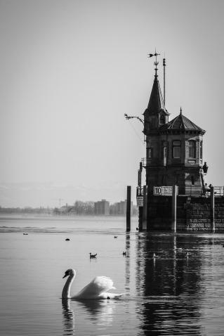 swan-814193_1920